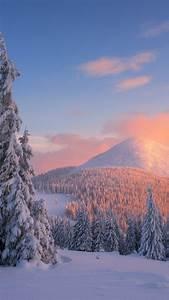 Winter Lights Aurora Wallpaper Carpathian Mountains Snow Winter Sunset Pine