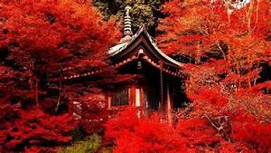 Full HD Wallpaper kyoto autumn tea house, Desktop ...