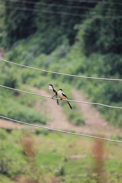 Birds Yellow Wire Animals Wallpaperflare