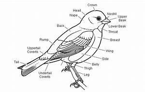 Listen To The Birds  The Bird Body Structure Is What Kind Of