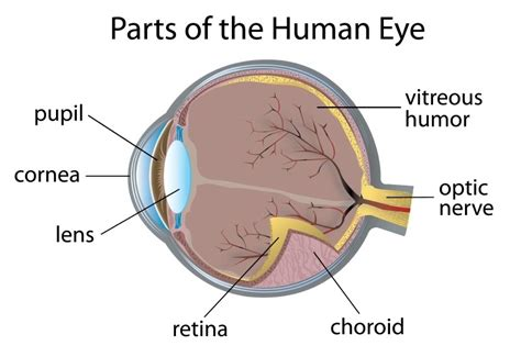 diabetes   eyes   retinopathy diabetes