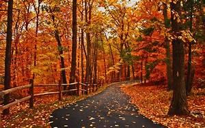 Autumn Road Peaceful Great Walk Path Amazing Forest Orange ...