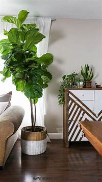 fiddle fig tree How to Care for a Fiddle Leaf Fig Tree – HAWTHORNE AND MAIN