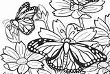 Butterfly Coloring Pages Screen Lou Am sketch template