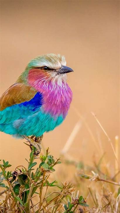 Colorful Bird Background Iphone