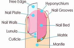 Hd wallpapers nail parts diagram deaadesign hd wallpapers nail parts diagram ccuart Images
