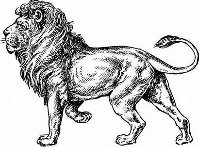 Lion Drawing Clip Walking Svg Clipart Vector