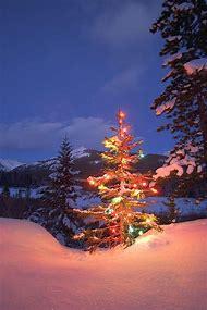 Outdoor Christmas Tree at Night