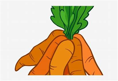 Carrots Carrot Clipart Bunch Welcome Baamboozle Much