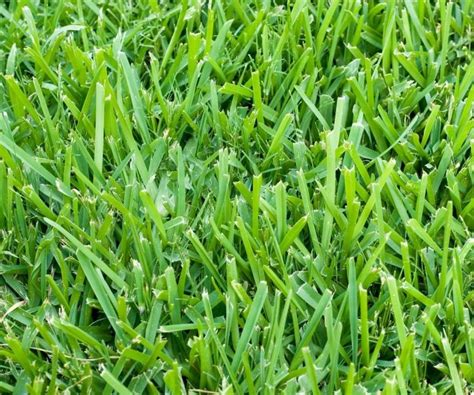 best type of grass six types of grass for florida lawns