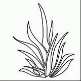 Plants Coloring Plant Seaweed Drawing Sea Grass Underwater Ocean Aquatic Clipart Shrubs Colouring Kelp Printable Draw Seagrass Aquarium Getdrawings Clipartmag sketch template