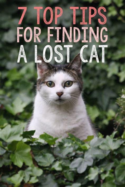 7toptipsforfindingalostcat  Cat, Kitty And Animal