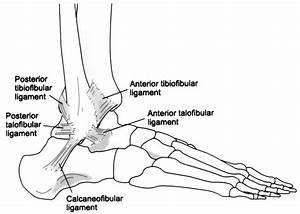 Printable Ankle Diagrams