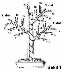 bonsai wiring technique bonsai penjing pinterest With wiring bonsai roots