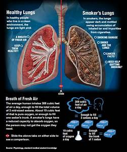 Healthy Lungs vs. Smoker's Lungs. For an interactive ...
