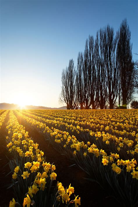 meravigliosi campi fioriti fito
