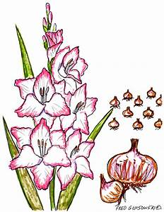Plant some Gladiolus in your Garden, they make Great