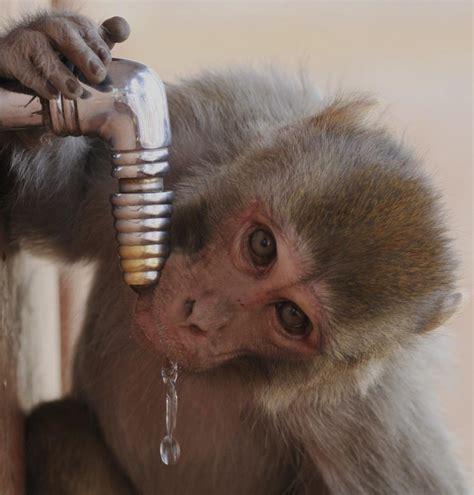 quanto costa l acqua rubinetto quanto costa l acqua giornalettismo