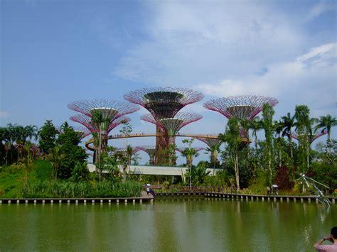supertree grove  gardens   bay singapore world