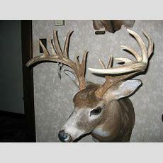 17 Elk Deer & Mule Deer Mount S Antler Log Home Cabin