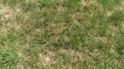 What Your Lawn Is Dying For