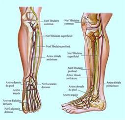 fourmillement dans la jambe droite ou gauche anxiet 233 nerf et circulation