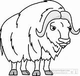 Ox Musk Clipart Outline Clip Muskox Animals Cliparts Coloring Pages Oxen Clipground Template Graphics Results Arctic Panda Sheet Library Kb sketch template