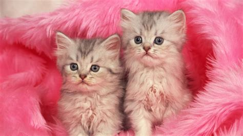 Pink Animal Wallpaper - animal pink wallpapers beautiful desktop wallpapers 2014