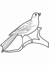 Canary Coloring Birds Ausmalbilder Kanarienvogel Colorear Dibujos Canario Designlooter Malvorlagen Ausdrucken Kostenlos Zum Imprimir Gratis sketch template