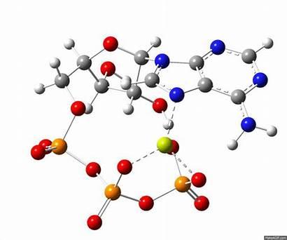 Magnesium Atp Triphosphate Adenosine Molecules Animated Gifs