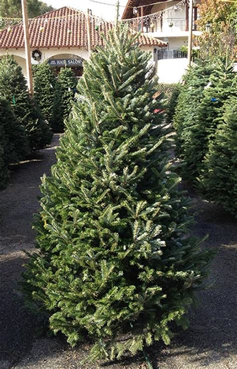 smith christmas tree farm harrisburg best 28 smith christmas tree farm harrisburg best 28 7694