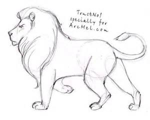 How to Draw Lion Step by Step