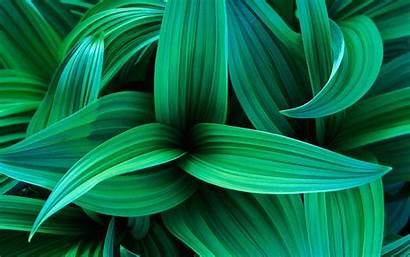 Leaves Wallpapers Exotic Leaf Plant Backgrounds Nature