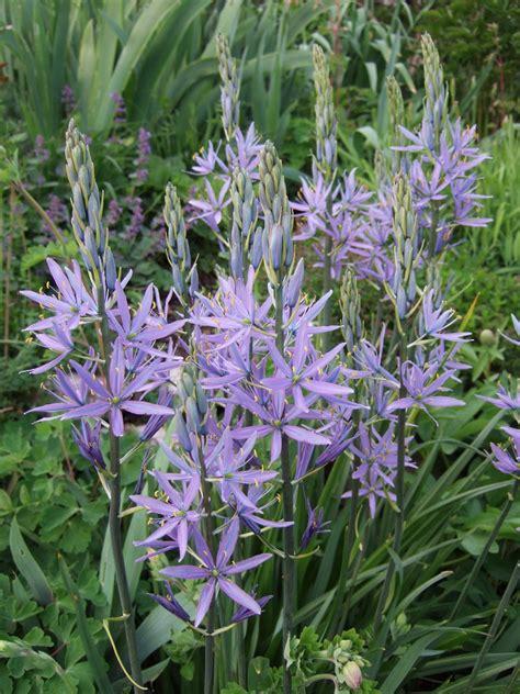 Garten Der Sterne by Jura Garten Blaue Sterne