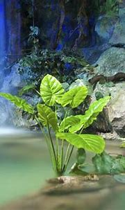 The Best Indoor Plants For Tropical Interior Designs
