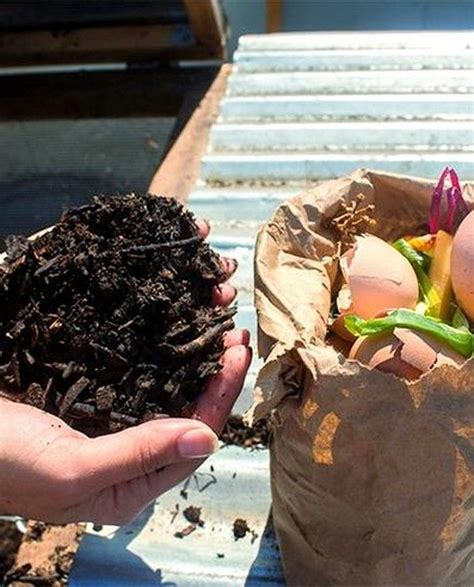 If your coffee is tasting just a little too bitter to suit you, you don't have to switch coffees. How to Use Eggshells and Coffee Grounds as Garden Compost - Chowhound in 2020 | Compost, Garden ...