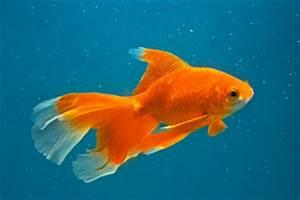 Endgröße Berechnen : goldfische haltung im gartenteich ~ Themetempest.com Abrechnung