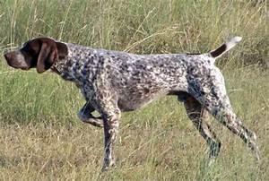perros de caza - Buscar con Google | Los que somos y los ...