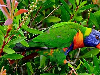 Birds Exotic Parrot Multicolor Wallpapers13