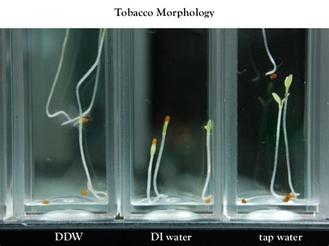 water heavy biophysical d2o effects