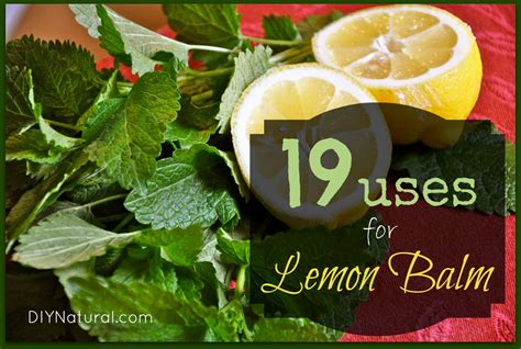 Lemon Balm Benefits For The Body