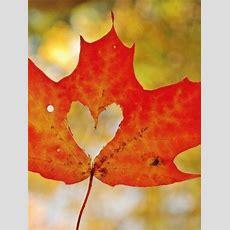 Fall Is, In Fact, My Favorite Season
