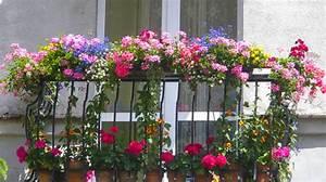 Fleur D Hiver Pour Jardinière : fleurir son balcon ou sa terrasse en t cannes ~ Dailycaller-alerts.com Idées de Décoration