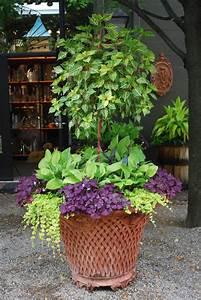 Blumenkübel Bepflanzen Vorschläge : lime irisine on standard lime hostas and red violet oxalis containery gardens with trees ~ Whattoseeinmadrid.com Haus und Dekorationen