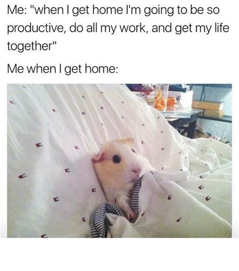 25+ Best Memes About Get My Life Together  Get My Life
