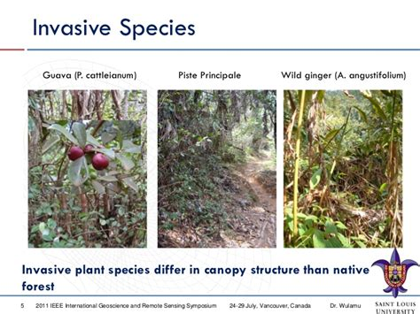 Mapping-invasive-plant-species-in-tropical-rainforest
