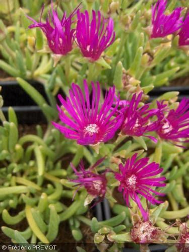 plante grasse exterieur vivace 28 images taciv plante grasse exterieur vivace 20171005222854