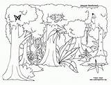 Rainforest Trees Drawing Coloring Pages Plants Amazon Getdrawings sketch template