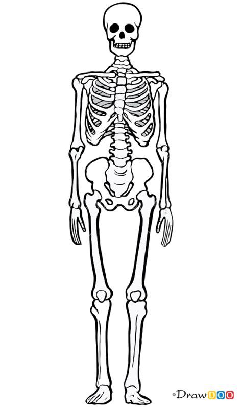draw human bones skeletons