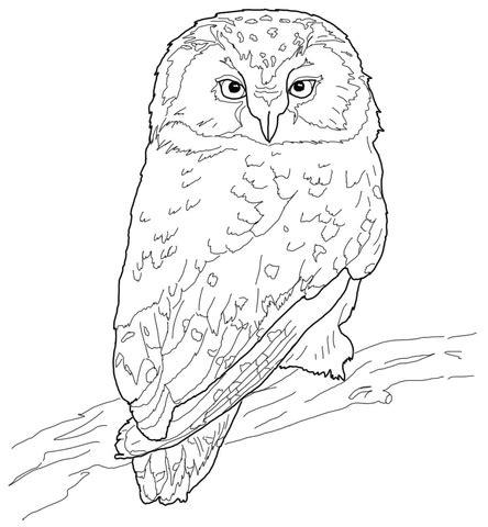 boreal owl coloring page supercoloringcom
